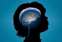 Evolution cerveau bebe