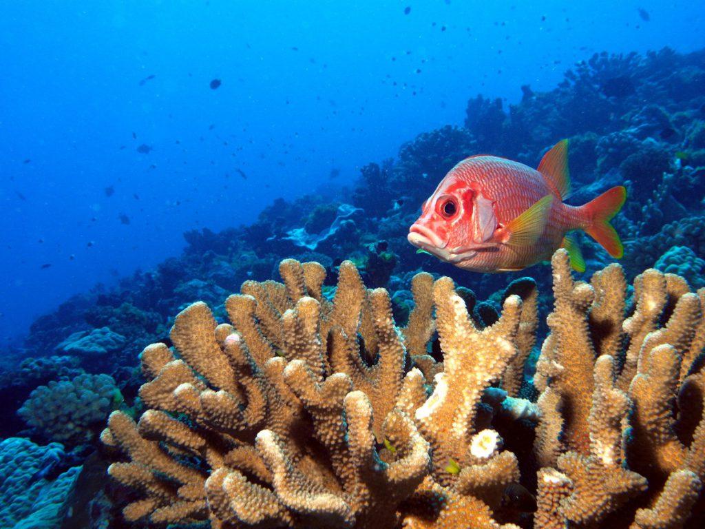 Corail Polynésien menacé par la crème solaire
