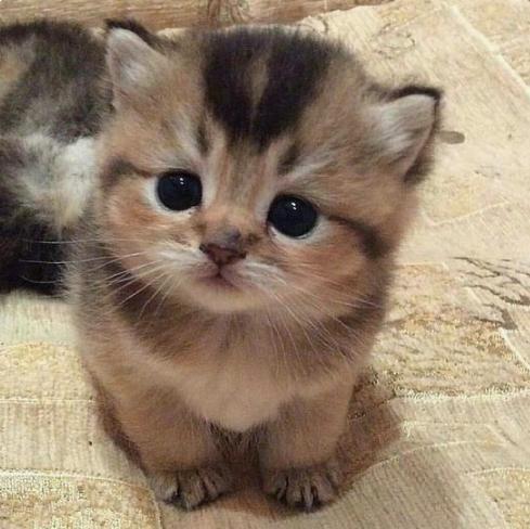 Encore plus mignon qu'un chaton : La soeur ainée pas jalouse qui va remettre la sucette à son petit frère pendant sa sieste.