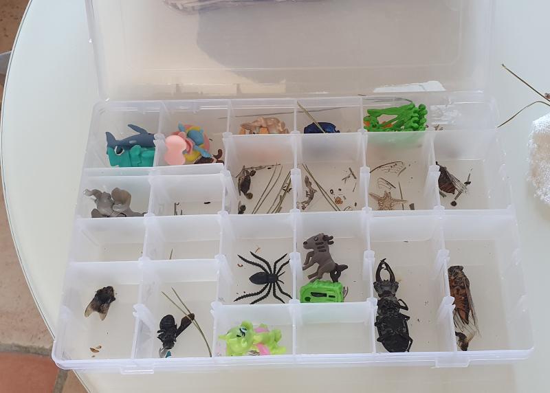 Boîte de rangement pour la collection d'insectes de ma fille.